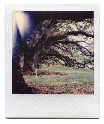 Under the oaks. Polaroid by Florent Dudognon