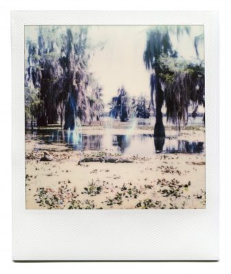 Alligator in Lake Martin, Louisiana. Polaroid by Florent Dudognon