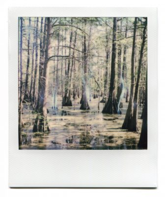 Bayou in Lake Martin, Louisiana. Polaroid by Florent Dudognon