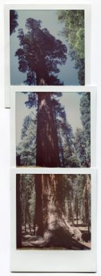 Sequoia, USA. Polaroids by Florent Dudognon