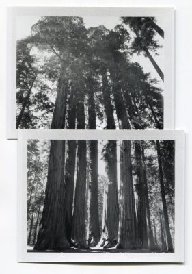 Sequoias, USA. Fuji Instant films by Florent Dudognon